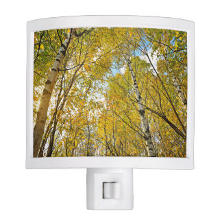 Birch Tree Forest In Fall Night Lites