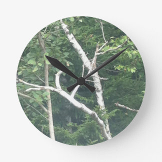 birch tree nature clock