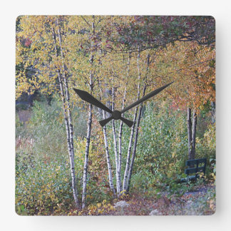 Birch Trees Clock