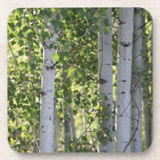 Birch Trees Coaster