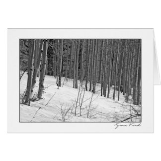 Birch Trees in Snow-Black & White Card