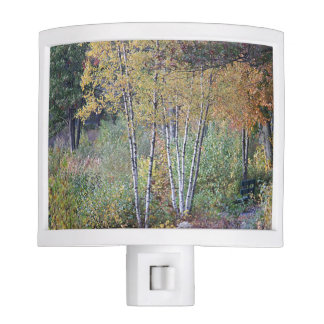 Birch Trees Night Light