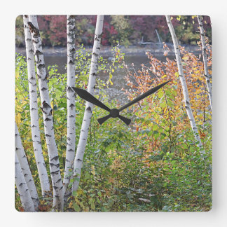 Birch Trees Square Wall Clock