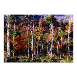 Birches Against Color Open Edition Print
