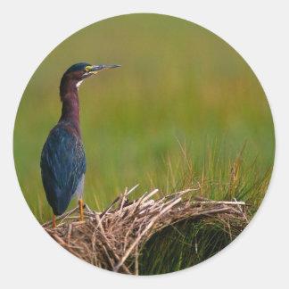 bird a quiet moment green heron round sticker