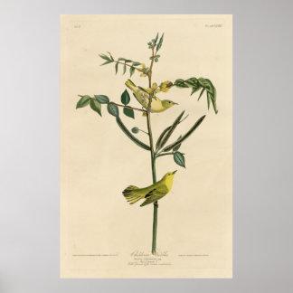 Bird, America, Children Warbler, Audubon, Vintage Poster