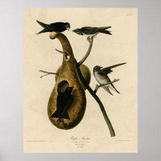 Bird, America, Purple Martin, Audubon, Vintage Poster