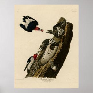 Bird, America, Red Headed Woodpecker, Audubon, Vin Poster