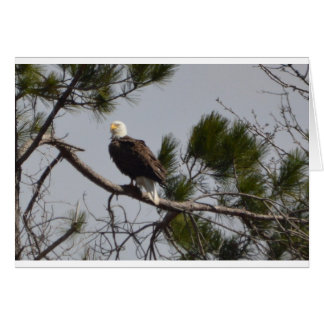 Bird American Bald Eagle Nature Card