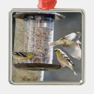 Bird American Goldfinch Nature Metal Ornament
