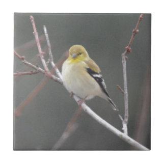 Bird American Goldfinch Nature Tiles