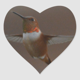 Bird American Rufous Hummingbird Nature Heart Sticker