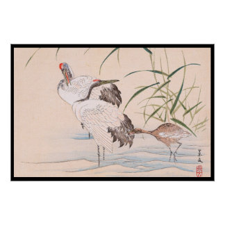 Bird and Flower Album, Wading Cranes vintage art Poster