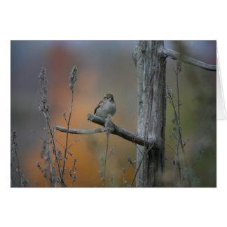 bird at truck stop card