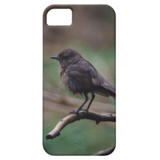 Bird Beauty iPhone 5 Cover