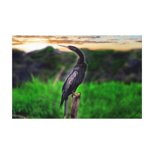 Bird Stretched Canvas Prints