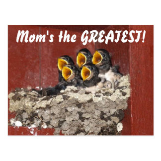 Bird Choir Sings Happy Mother's Day to Mom Postcard