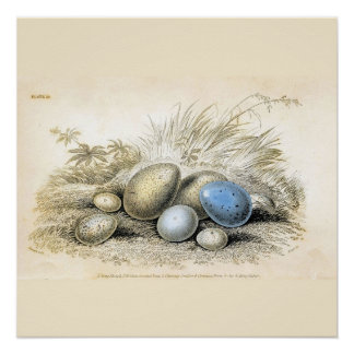 Bird Eggs Blue and Brown Personalize the Size Poster