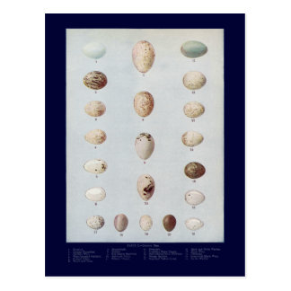 Bird Eggs Plate C Vintage Natural History Postcard