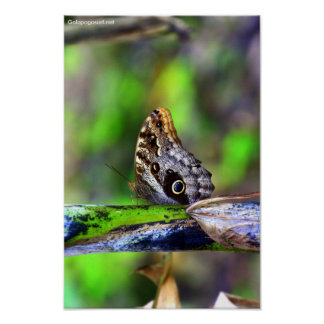 Bird Eye Butterfly Poster