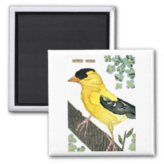 Bird: Goldfinch Magnet
