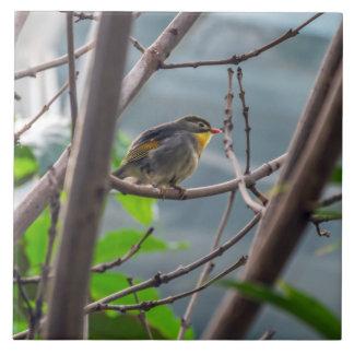 Bird in a tree ceramic tile