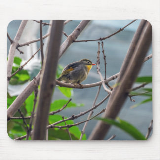 Bird in a tree mousepad