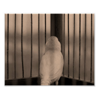 Bird in Cage Poster