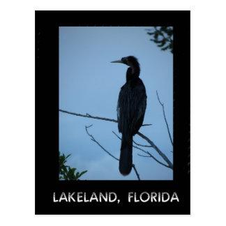 Bird in Tree in Lakeland Florida Postcard