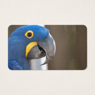 bird macaw blue animal pet Destiny'S Business Card