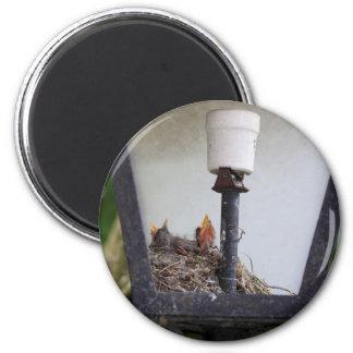 Bird nest in a street lamp. 2 inch round magnet