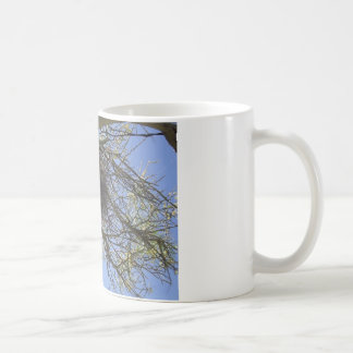 Bird Nest in Branches Classic White Coffee Mug