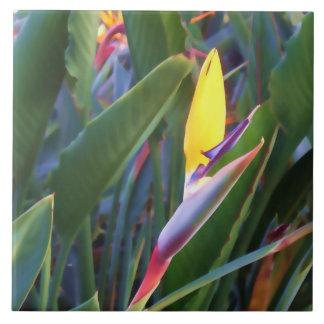 Bird of Paradise #1 - Laguna Hills Tile