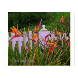 Bird of Paradise 3 Post Cards