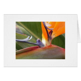 """Bird of Paradise Blossom"" Card"