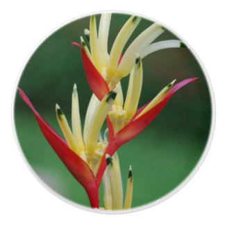 Bird of Paradise Ceramic Knob