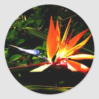Bird of Paradise Classic Round Sticker