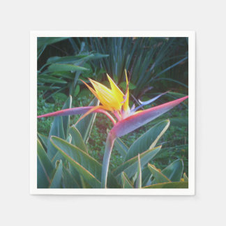 *Bird of Paradise* Cocktail Napkins Paper Napkin