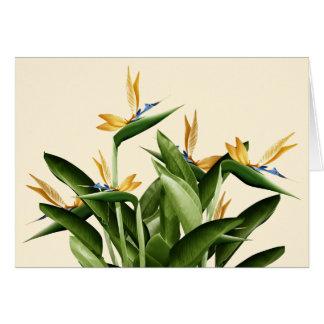 Bird-of-Paradise Fantasy Plant Card