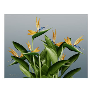 Bird-of-Paradise Fantasy Plant Poster