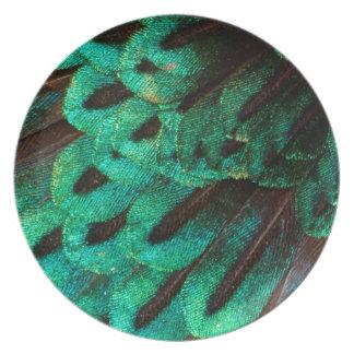 Bird of Paradise feather close-up Plates