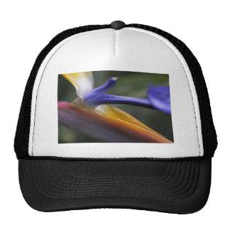 Bird of Paradise Flower 1 Trucker Hat