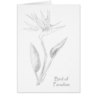 Bird of Paradise Flower coloring note card