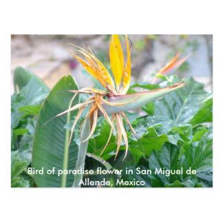 Bird of Paradise Flower Postcard