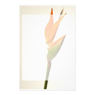 Bird Of Paradise Flower Stationery Design