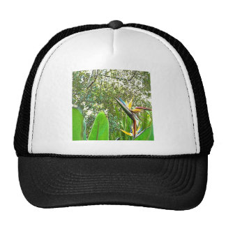 Bird of Paradise Flower Trucker Hat