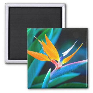 Bird Of Paradise (Hawaii) Magnet