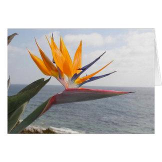 Bird of Paradise in paradise Card