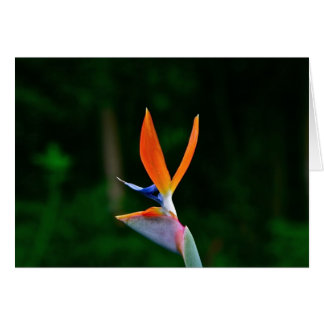 Bird of Paradise, Maui Card