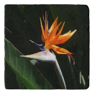 Bird of Paradise Orange Tropical Flower Trivet